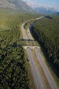 aerial-view-banff-wildife-overpass
