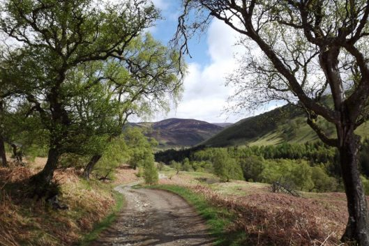 cropped-glentilt-may2015-004